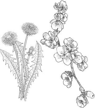 Fleurs pissenlit et pommier noir sur blanc miel de printemps