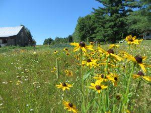 Le miel polyfloral et le miel monofloral issus des champs fleuris de Lanaudière et des environs.