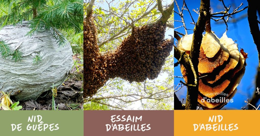 essaim d'abeilles, nid de guêpes ou d'abeilles?