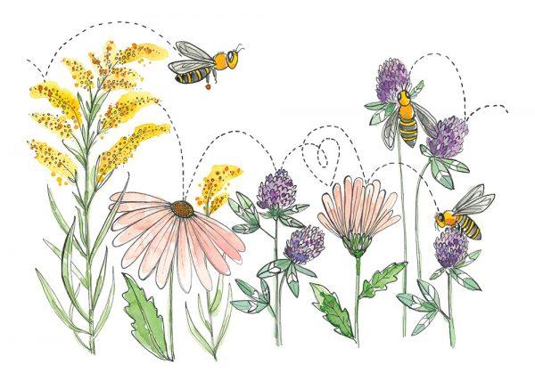 Carte de souhaits - Abeilles butinent trèfle, échinacée et verge d'or - Stéphanie Renière Illustration - Merveilles d'abeilles