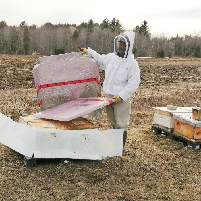 Que font les abeilles l'hiver au Québec?