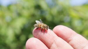 7 faits surprenants à connaitre sur les abeilles