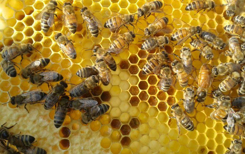 Aider les abeilles du quartier